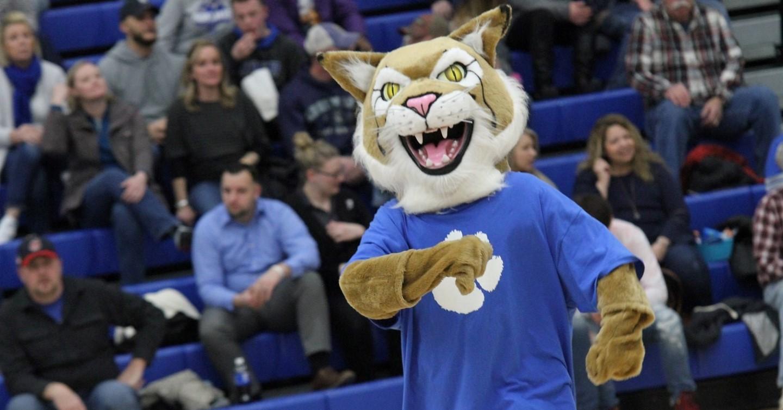 Bobcat Mascot in Gym