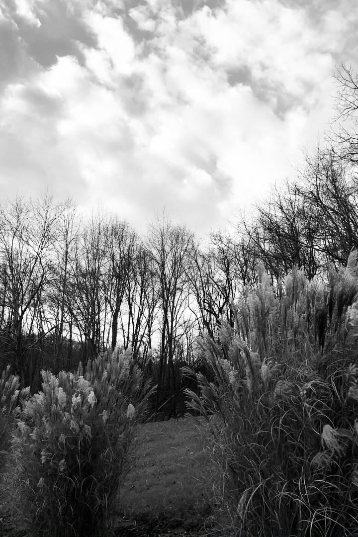 B&W treescape