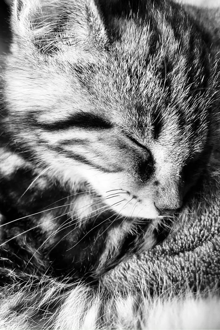 B&W Cat face