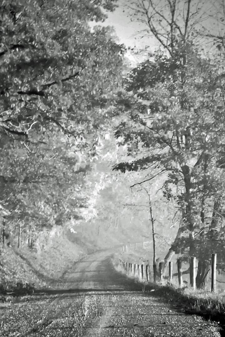 B&W road with trees
