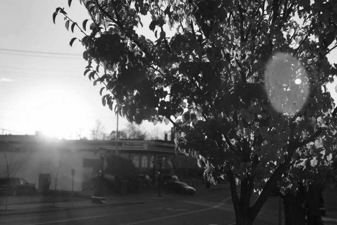 B&W  Tree